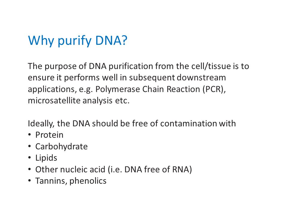 Why purify DNA