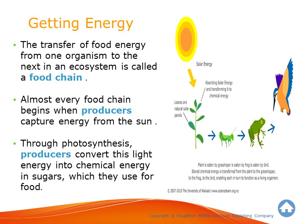 Energy Stored In Food Is Called