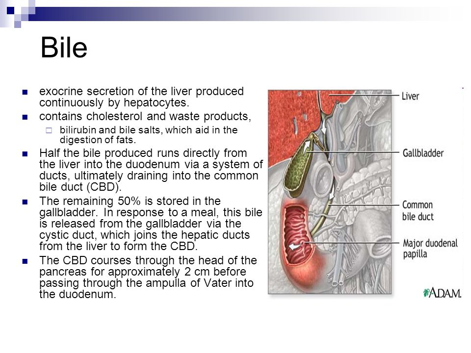 DISEASES OF THE GALL BLADDER AND EXTRAHEPATIC BILE DUCTS - ppt video ...