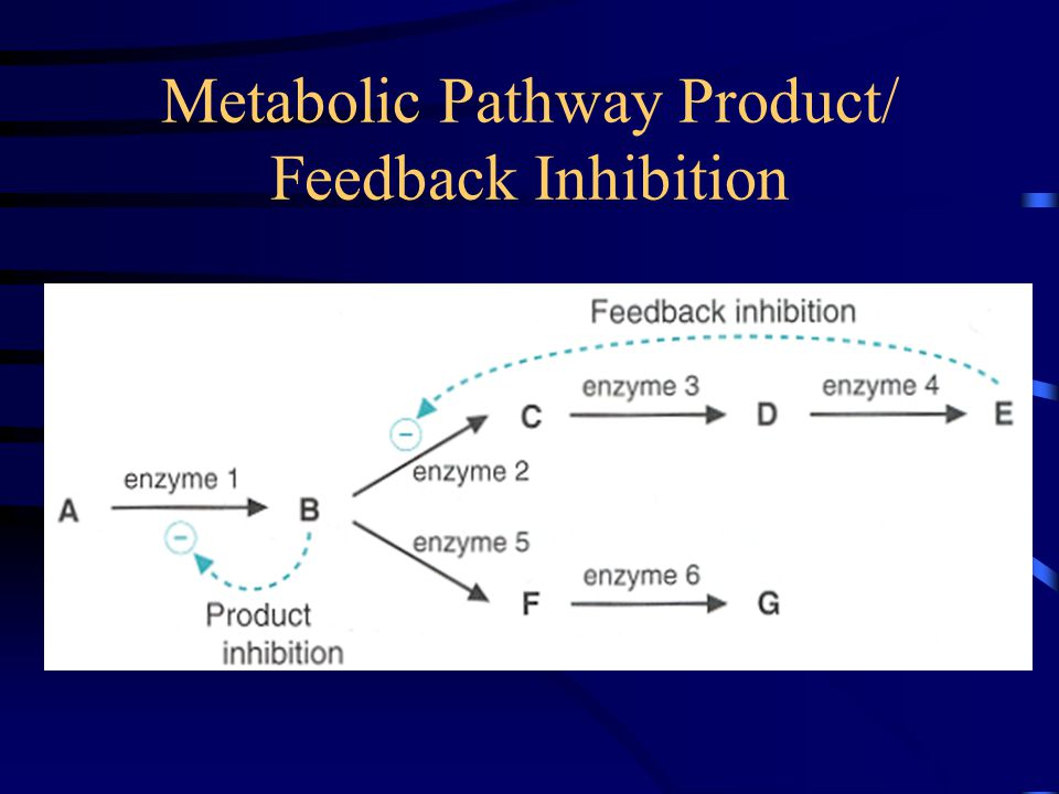 an overview of enzymes Index to course material index to section 12 enzymes index enzymes are biological catalysts- more than 1500 are known, which catalyze many different biochemical.