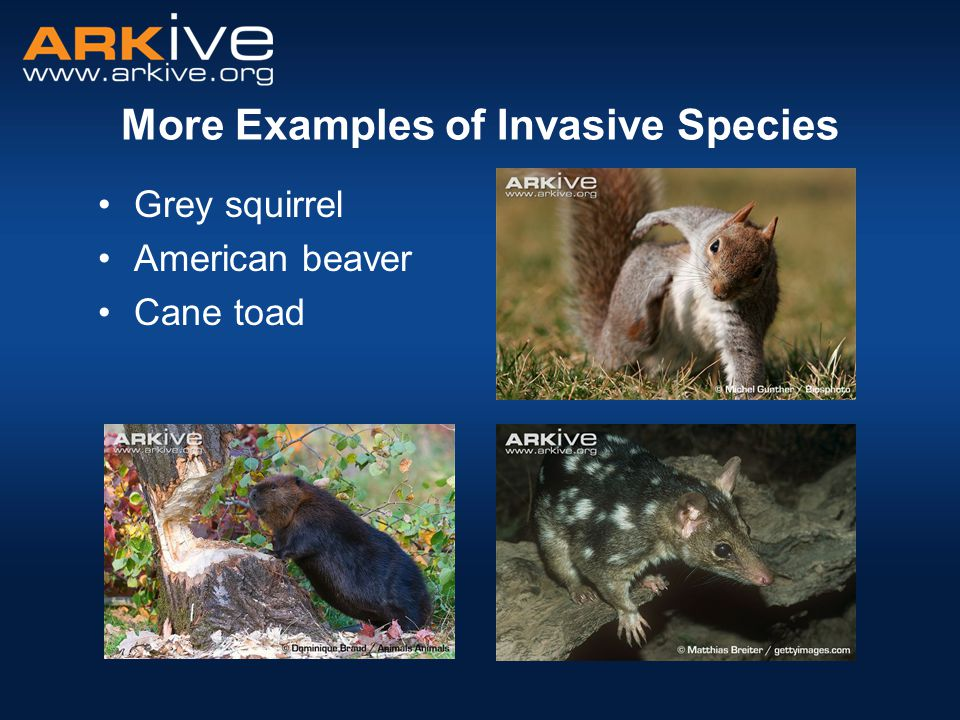 Climate change and invasive species.