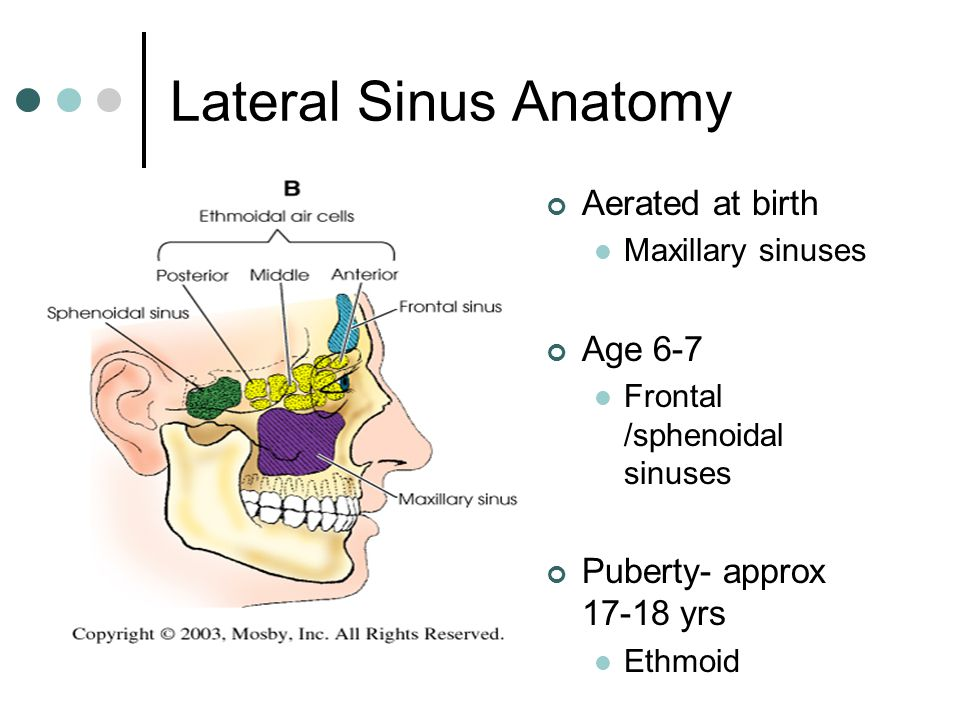 Paranasal Sinuses Week ppt video online download