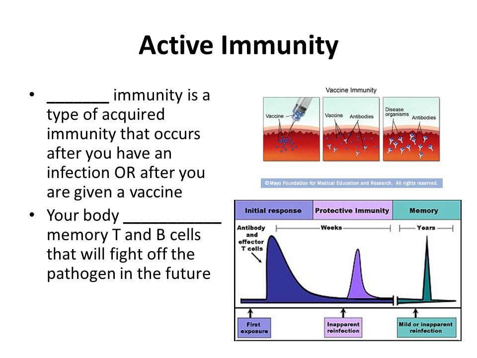 Active Immunity _______ immunity is a type of acquired immunity that occurs after you have an infection OR after you are given a vaccine.