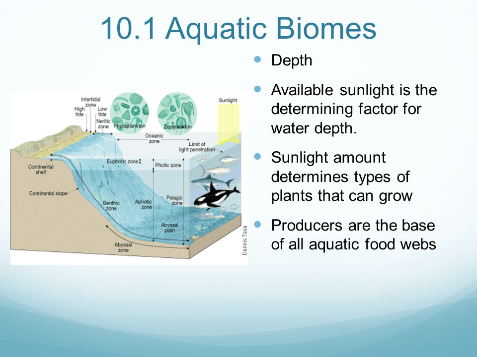 Chapter 10 Freshwater Biomes Ppt Video Online Download