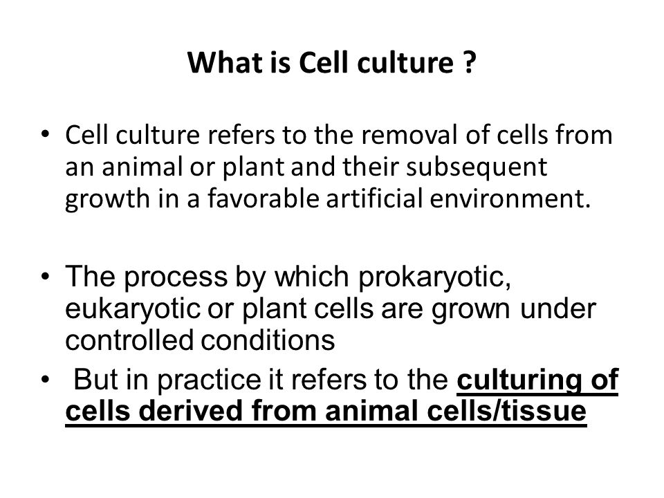 Lec # 15 Animal cell lines and culturing - ppt video online download