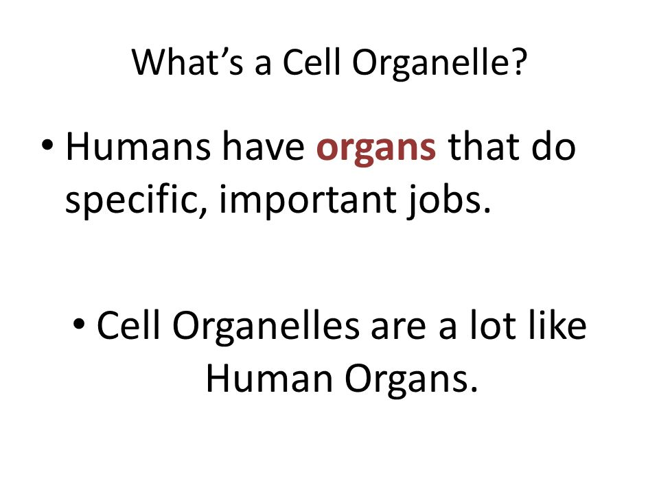 What's a Cell Organelle