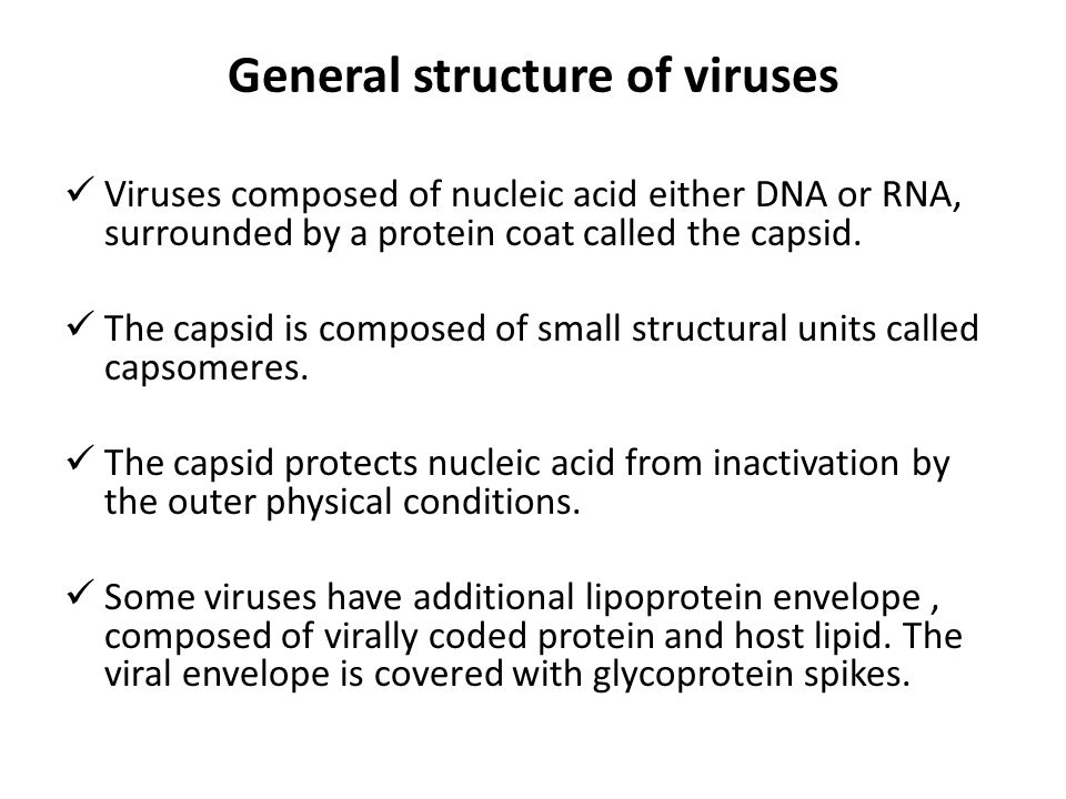 General structure of viruses