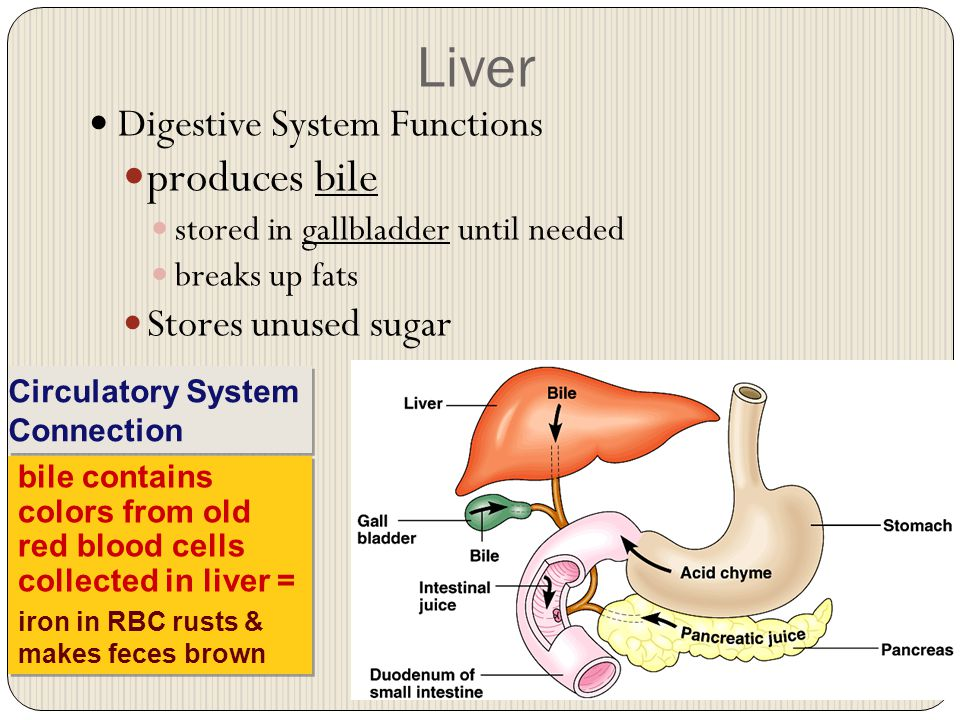 Function Of Liver Research Paper Academic Service Qhessayauny
