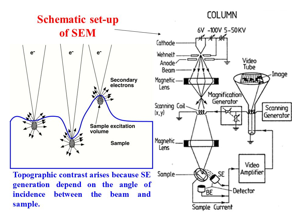 Scanning Electron Microscopy (SEM) - ppt download on hplc schematic, design schematic, ipad schematic, stm schematic, microscope schematic, iphone schematic,