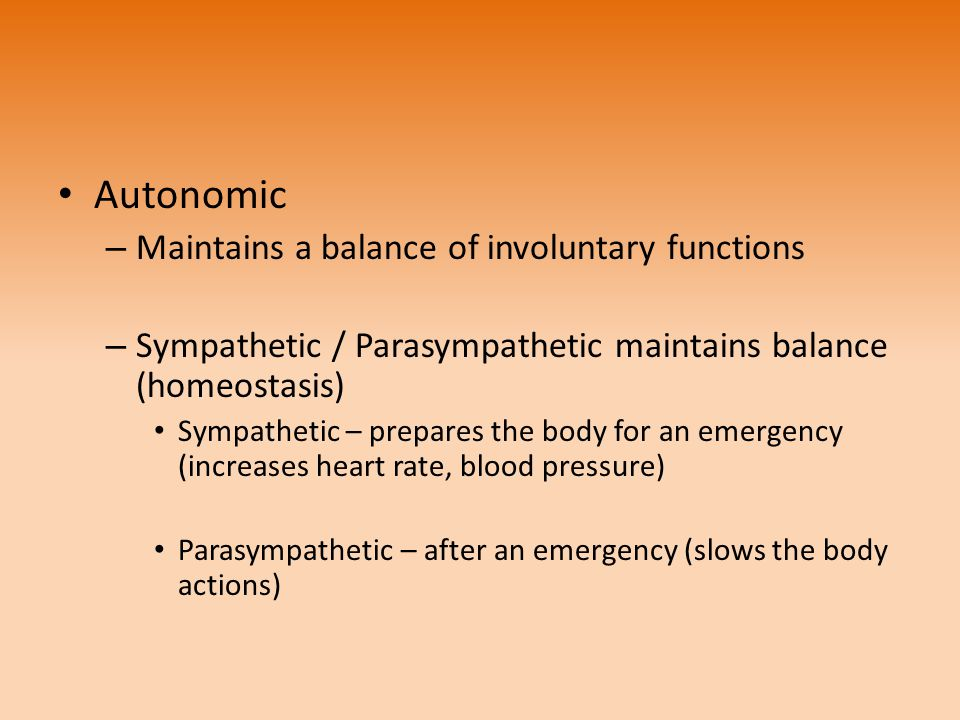 Autonomic Maintains a balance of involuntary functions