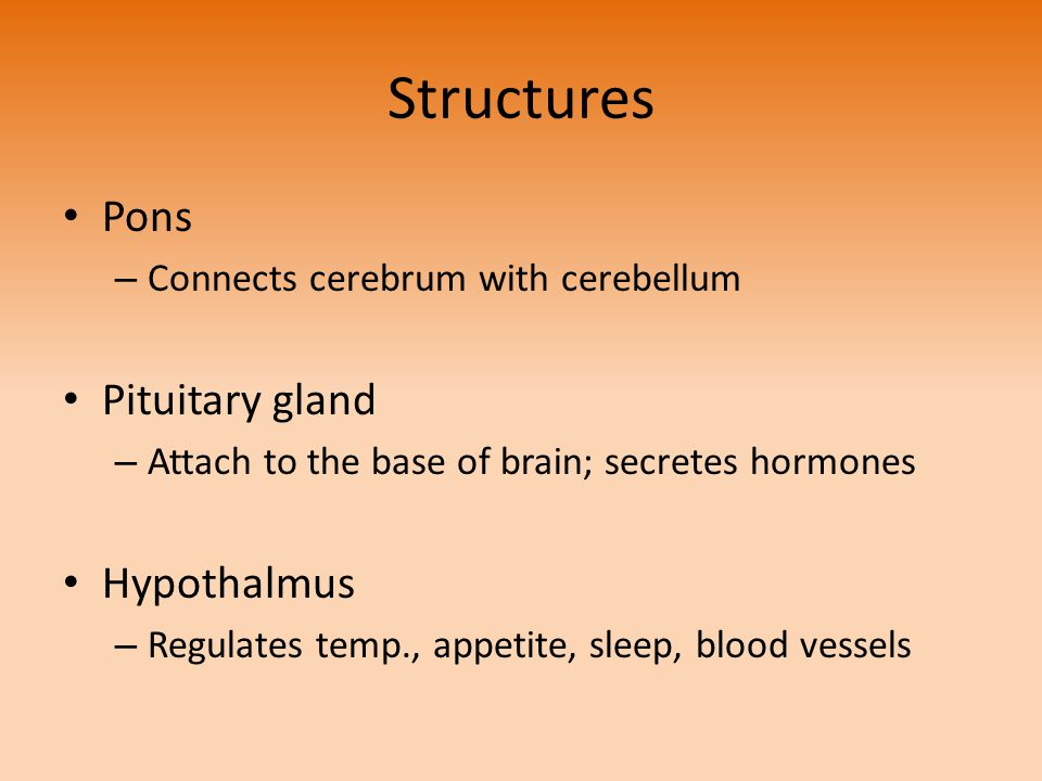 Structures Pons Pituitary gland Hypothalmus