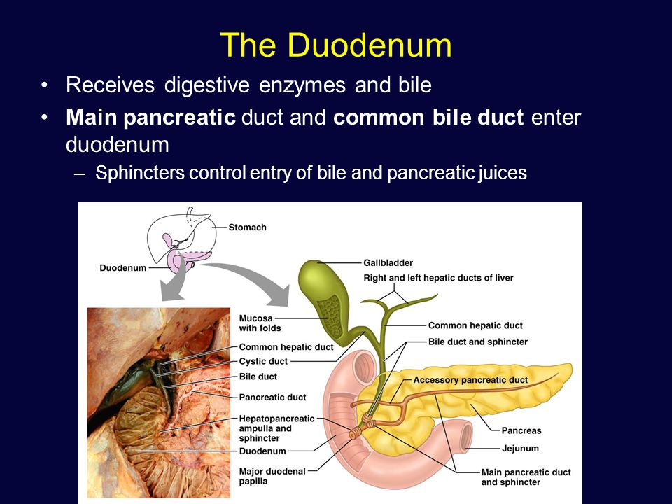 Images of Digestive Enzymes After Gallbladder Removal