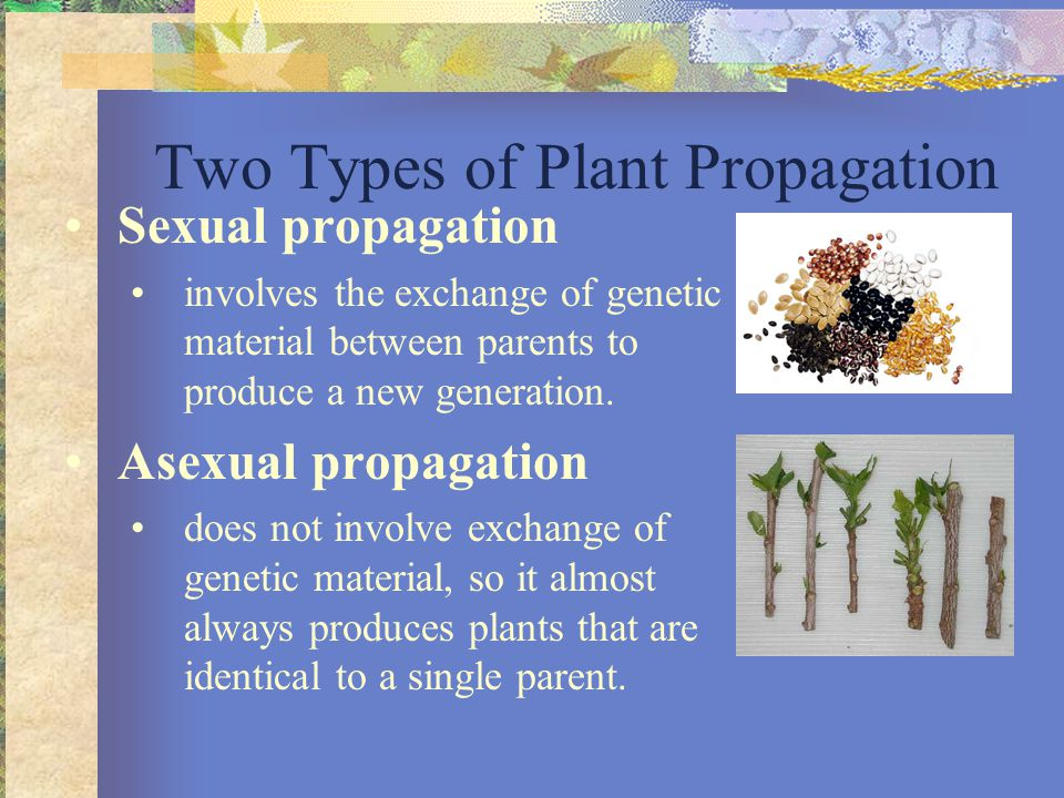 Asexual propagation of horticulture crop classifications