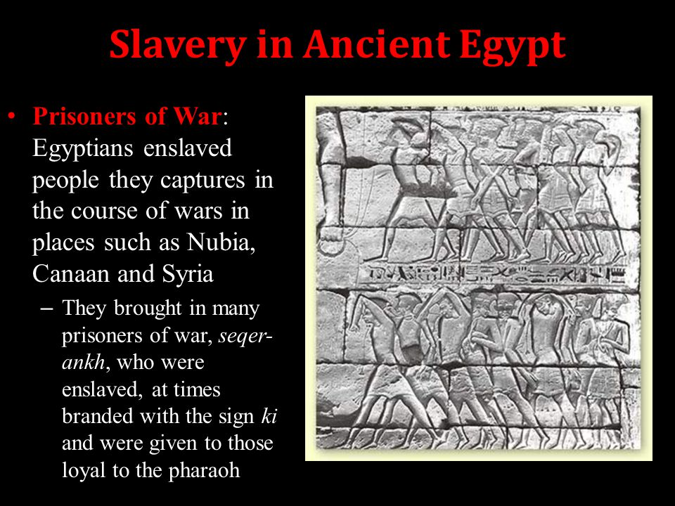 Life In Ancient Egypt Ppt Download