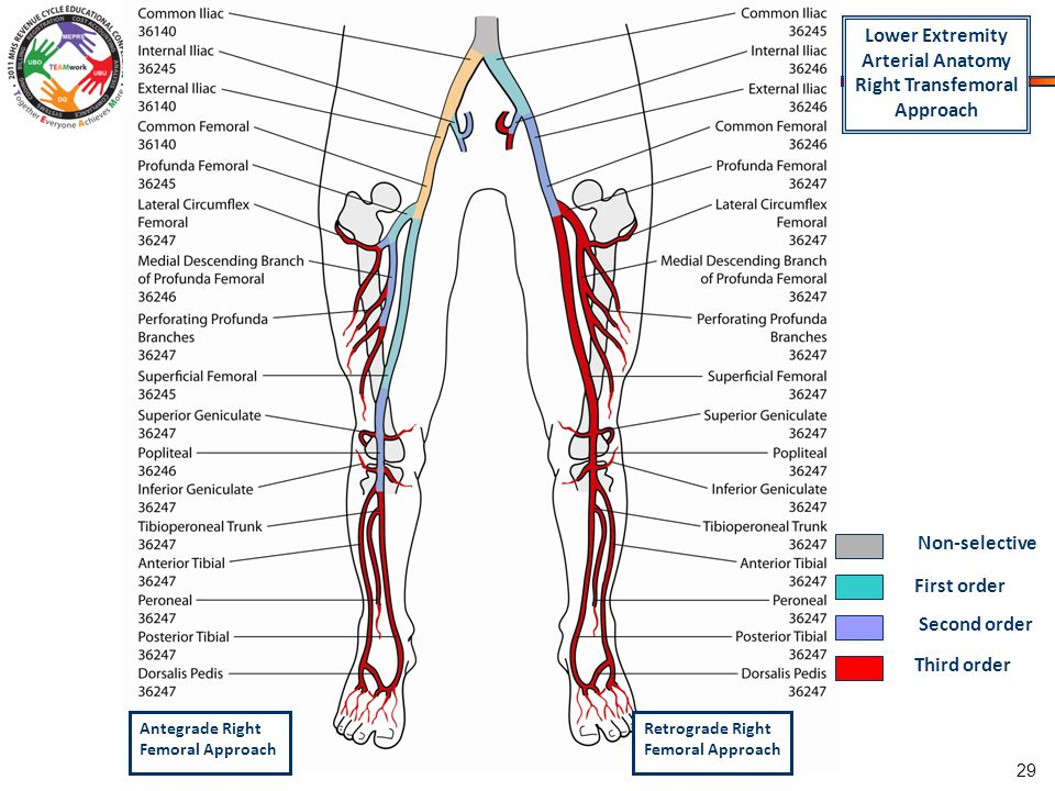 Bilateral Lower Extremity Arterial Diagram Auto Electrical Wiring