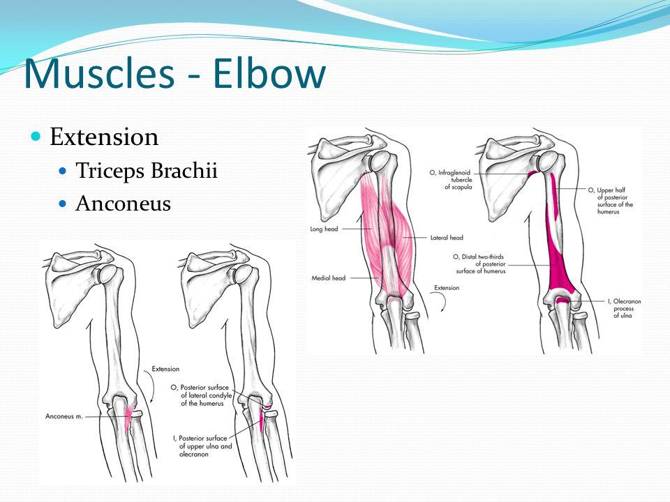 Diagram Of Elbow Straightening - Basic Guide Wiring Diagram •
