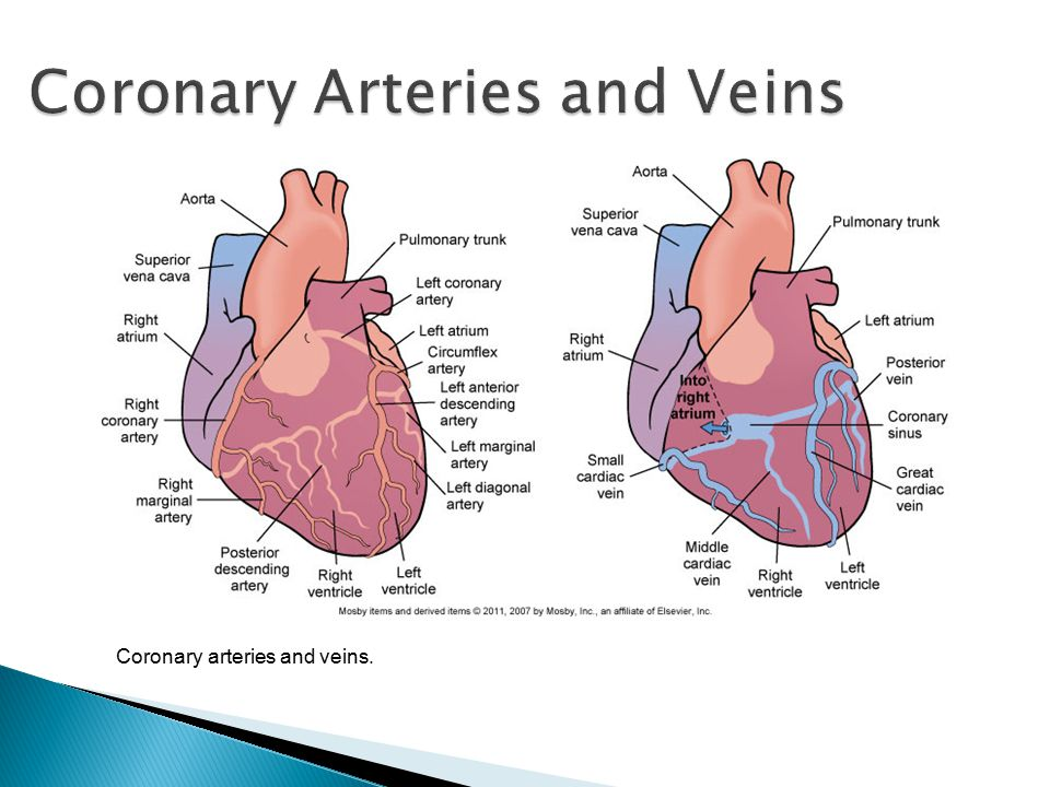 Coronary Arteries And Veins Diagram - Block And Schematic Diagrams •