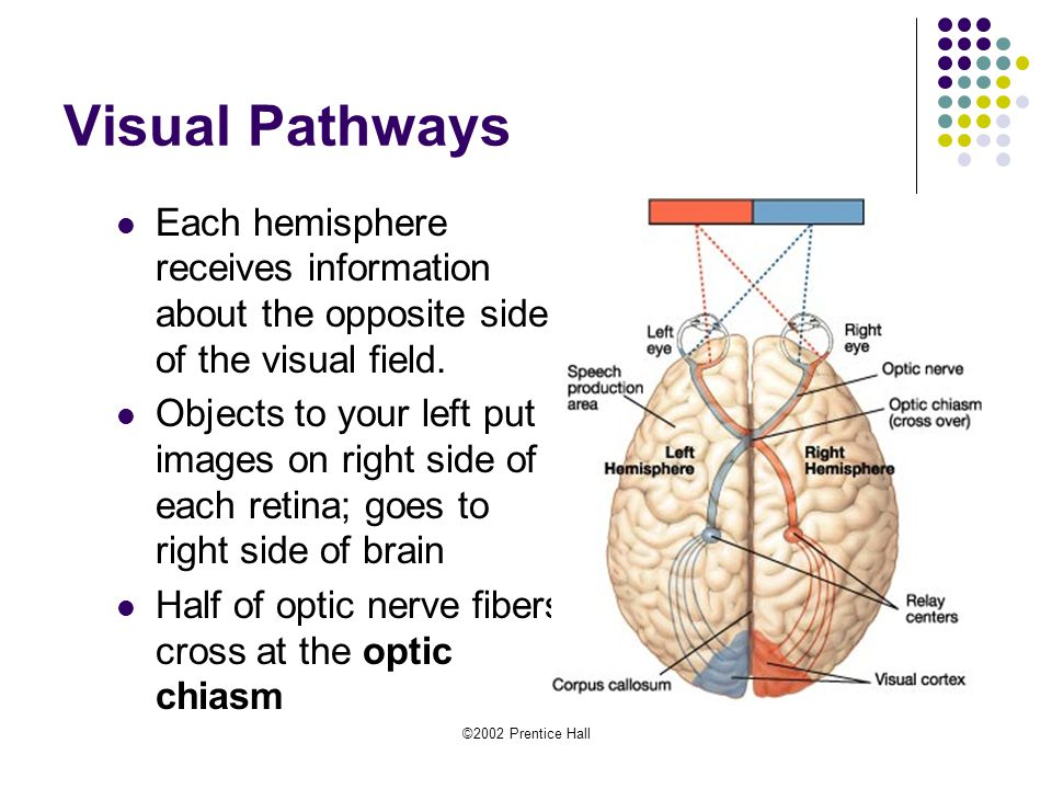 Neurons Hormones And The Brain Ppt Video Online Download