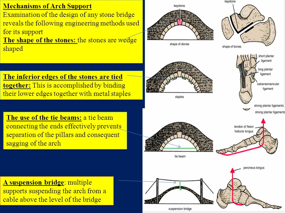 Mechanisms of Arch Support