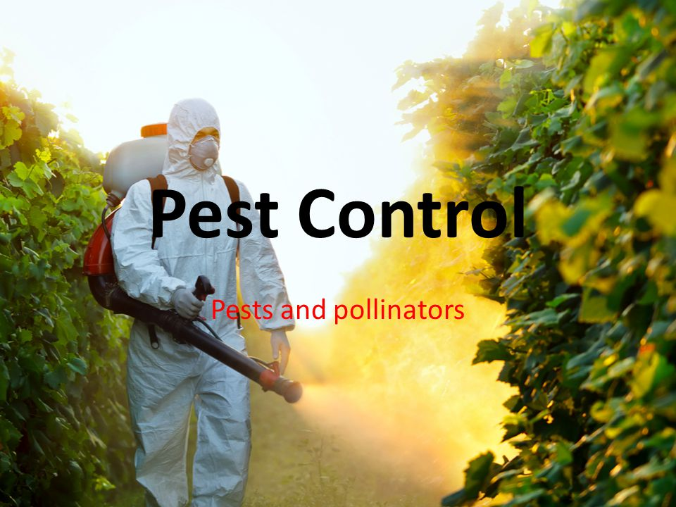 Pest Control Pests and pollinators
