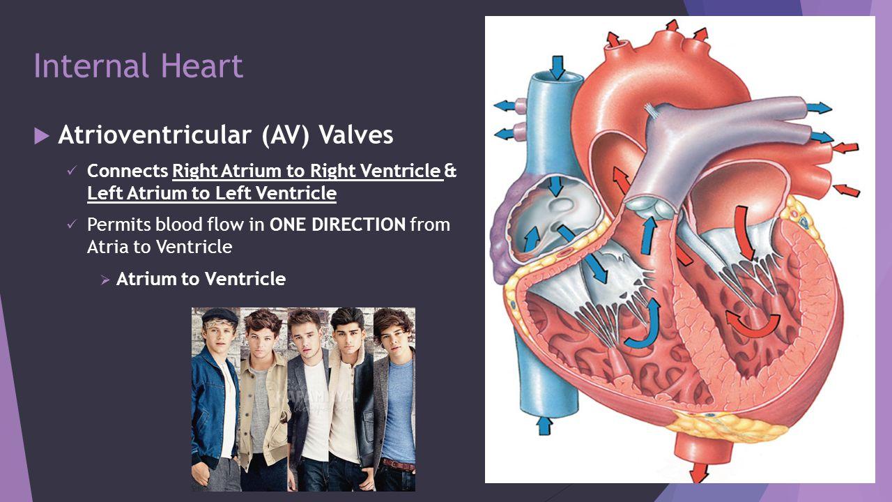 Internal Heart Interatrial Septum Interventricular Septum Ppt