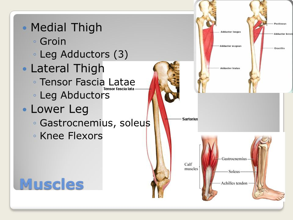 Knee Outline. - ppt video online download