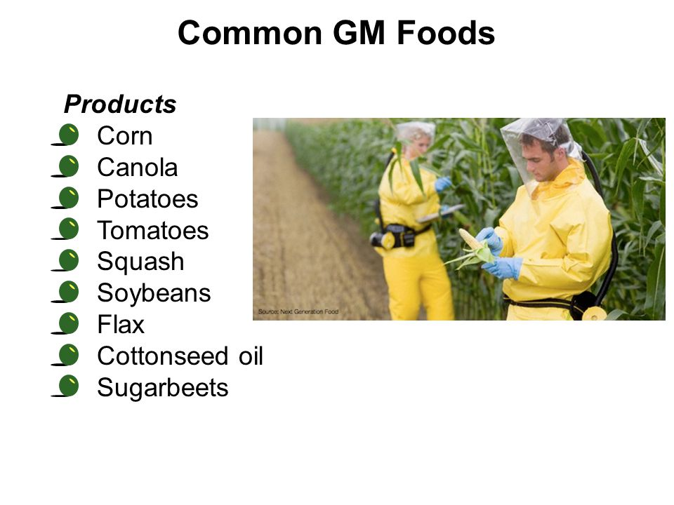 Common GM Foods Products Corn Canola Potatoes Tomatoes Squash Soybeans