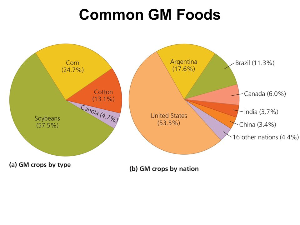 Common GM Foods Globally, in 2007, more than 12 million farmers grew GM foods on 114 million ha of farmland, producing $6.9 billion worth of crops.