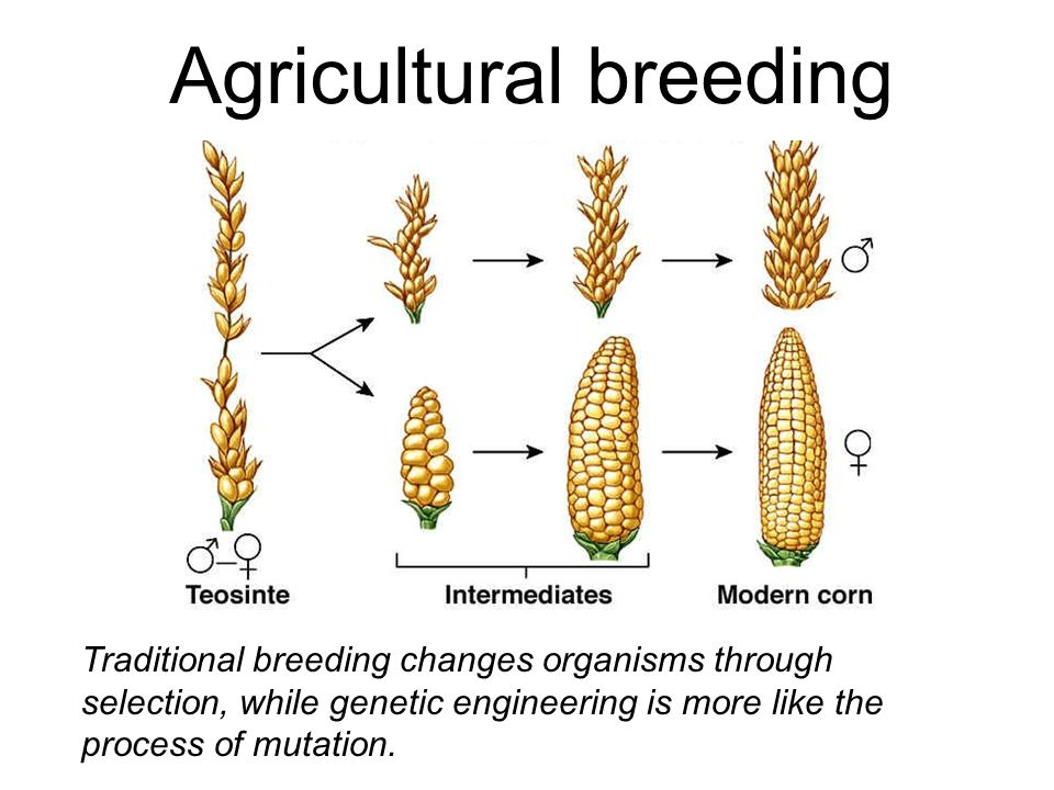 Agricultural breeding
