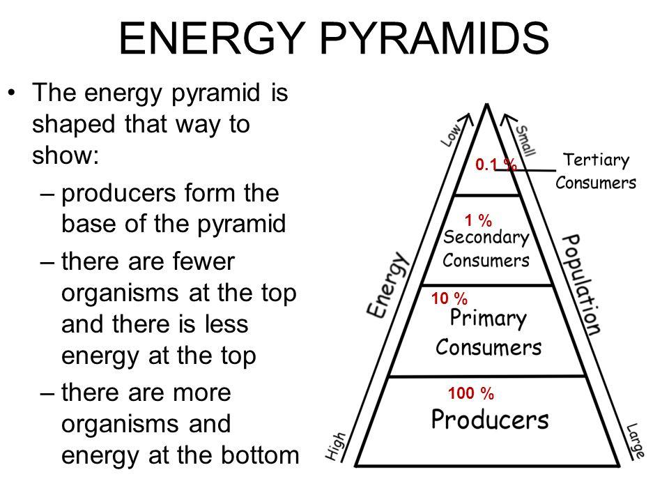 Energy Pyramid Percentages Food Chain & Food ...