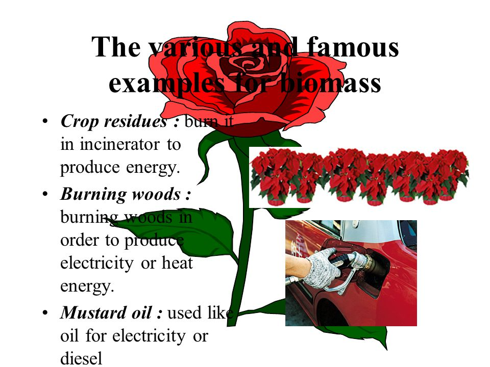 The various and famous examples for biomass