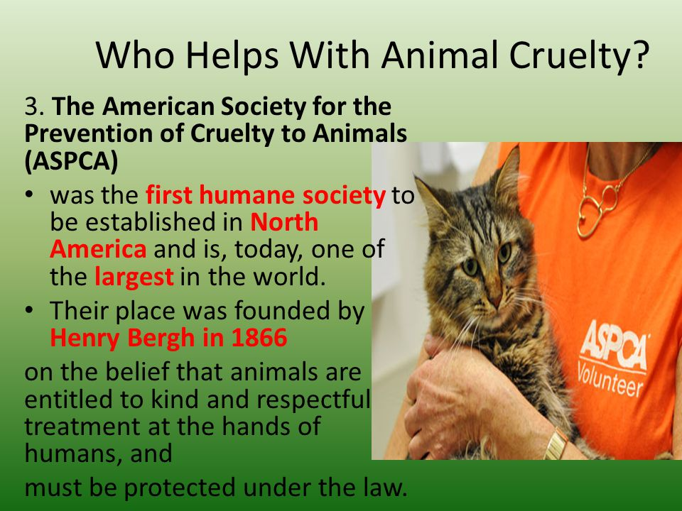 essay about cruelty to animals Do my essay on cruelty towards animals cheap  let me tell you a few examples of cruelty against animals it is not very unusual in india, to find cows sitting in the middle of a road, seemingly basking in the sun and having a good time.