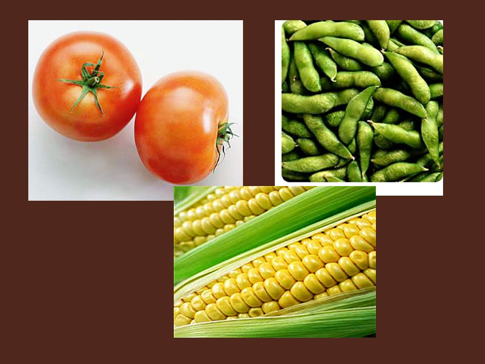 GMO crops—you cannot really notice any remarkable difference, these crops look healthy.