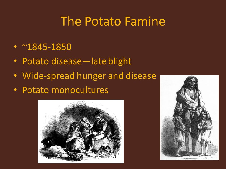 The Potato Famine ~ Potato disease—late blight