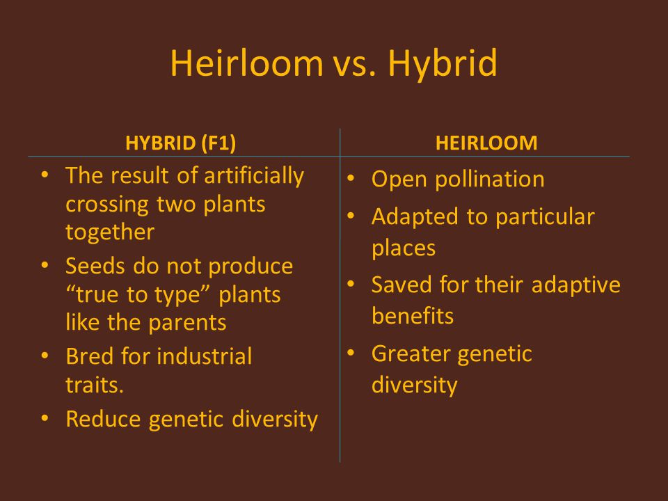 Heirloom vs. Hybrid HYBRID (F1) HEIRLOOM. The result of artificially crossing two plants together.