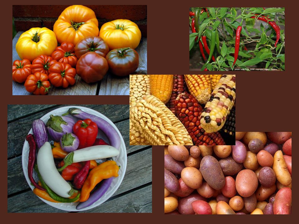 Examples of heirloom crops