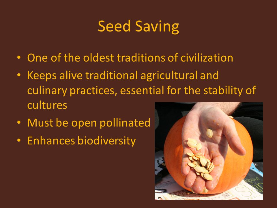 Seed Saving One of the oldest traditions of civilization