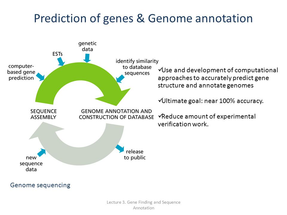 how to download gene sequence from ncbi