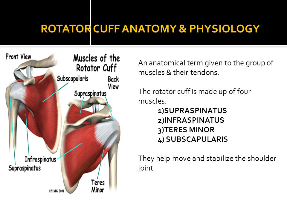Rotator Cuff Injuries. - ppt video online download