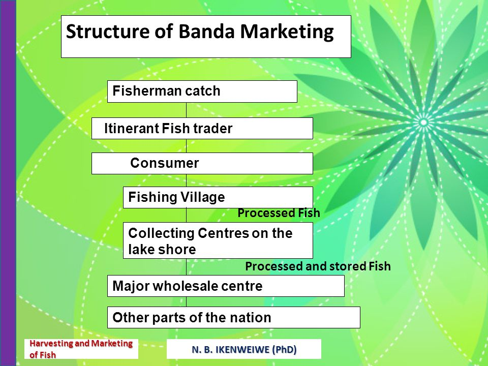 marketing of major fish species in Major causes are excessive food demands, market pressures, fishing gear technology development, weak or lack of appropriate management approaches and policies, accidental by-catches, and an unregulated aquarium trade in wild species, such as siamese tiger perch, arowanas, many barbs, characins and other tropical fish.