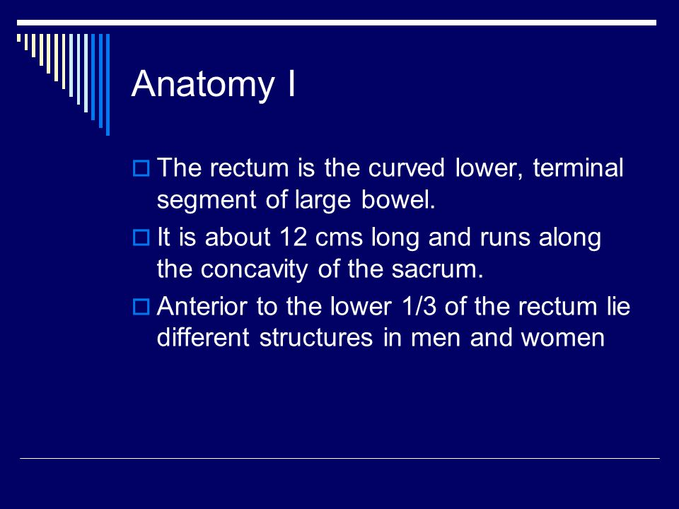 Anatomy I The rectum is the curved lower, terminal segment of large bowel. It is about 12 cms long and runs along the concavity of the sacrum.