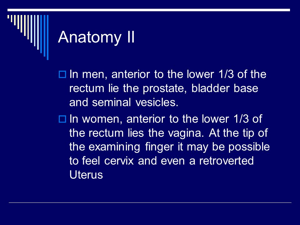 Anatomy II In men, anterior to the lower 1/3 of the rectum lie the prostate, bladder base and seminal vesicles.