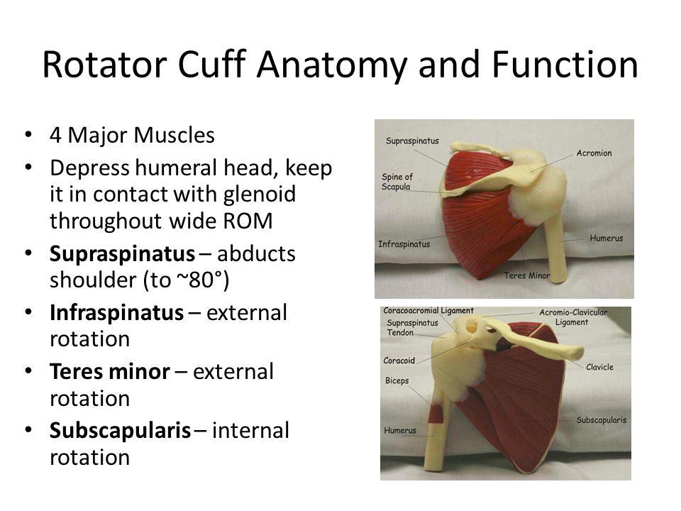 Shoulder Pain And The Shoulder Exam Ppt Video Online Download