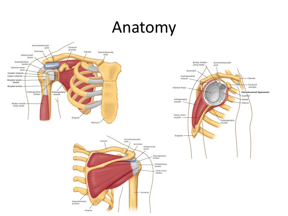 Shoulder Pain and the Shoulder Exam - ppt video online download