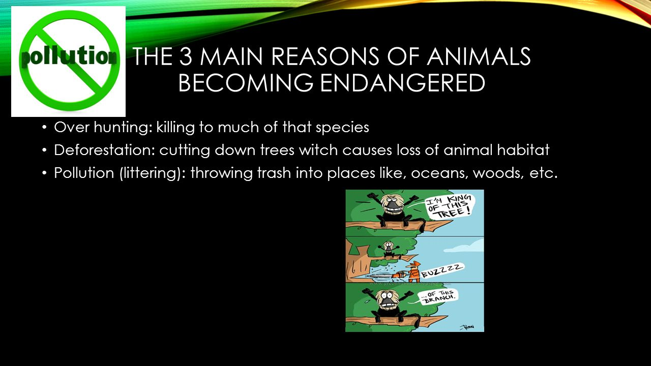 causes and effects of endangered animals