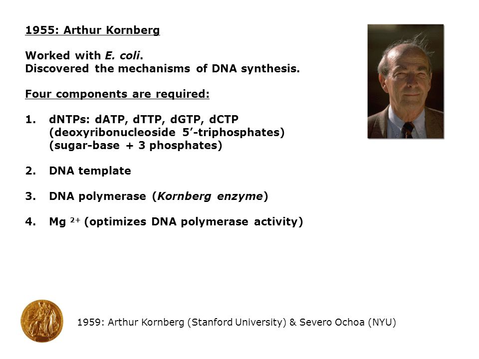 Discovered the mechanisms of DNA synthesis.