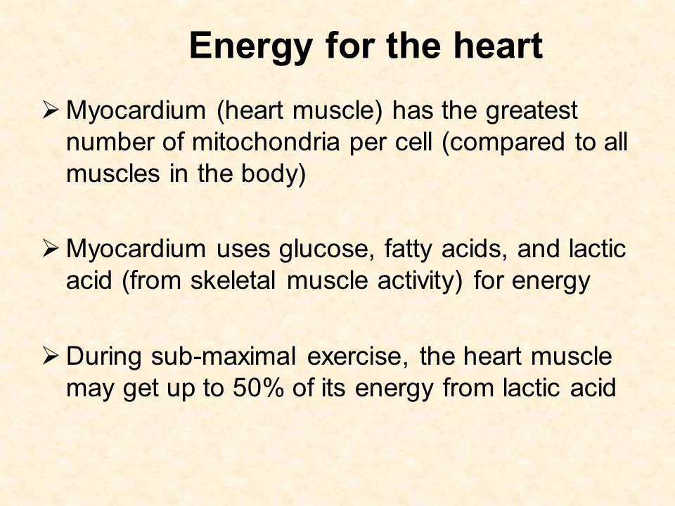 Energy for the heart Myocardium (heart muscle) has the greatest number of mitochondria per cell (compared to all muscles in the body)