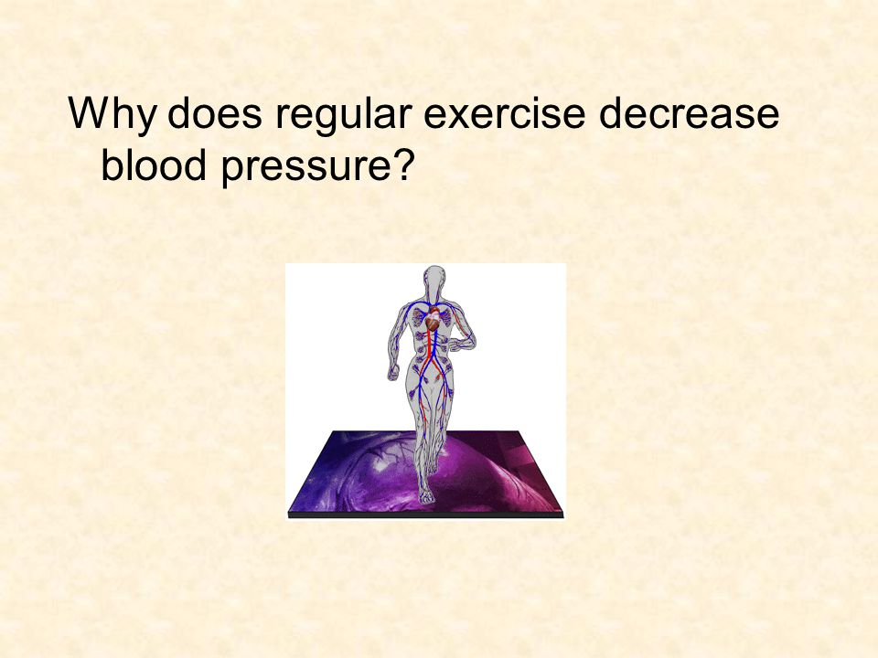 Why does regular exercise decrease blood pressure