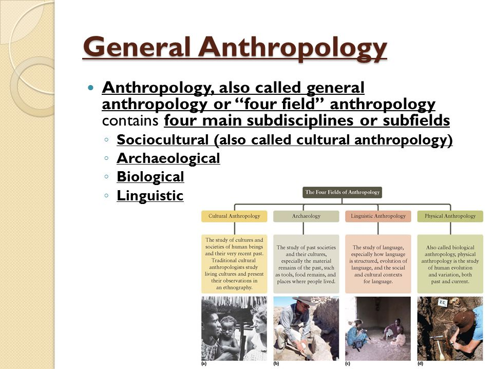 an analysis of the job of anthropologist and the anthropological study Anthropology is the study of the origins and diversity of human biology and culture anthropologists study the evolution and adaptations of the human species through the four major subdivisions of the discipline: archaeology, biological anthropology.