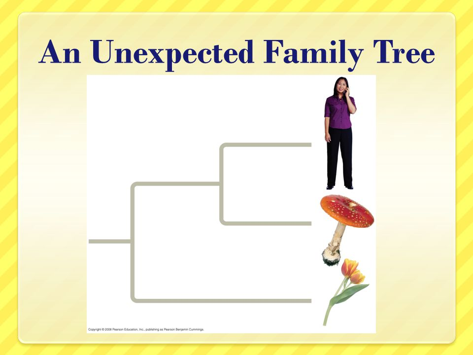 An Unexpected Family Tree